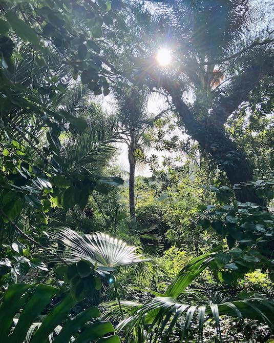 El Botánico de Sagra